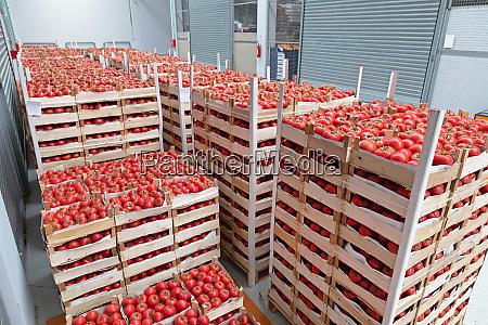 storage tomato