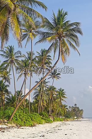 palms at beach