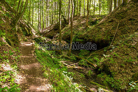 hiking trail though the palatinate forest