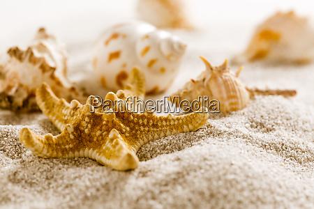 assortment of natural seashells on sand