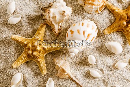 assortment of seashells on sand concept