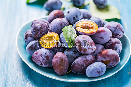 freshly picked plums zwetschgen fruits in