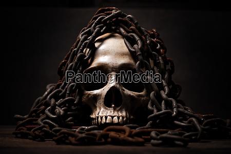still life of human skull that