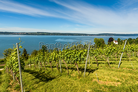view of lake constance from the