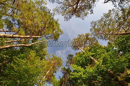 forest lake kesselsee eggstaett chiemgau upper