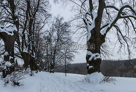 allee mit schnee im winter panorama