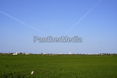 cultivated rice fields with illuminated