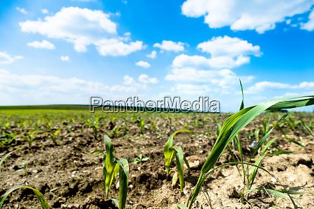 plants grow in a field