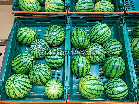 miniature watermelons