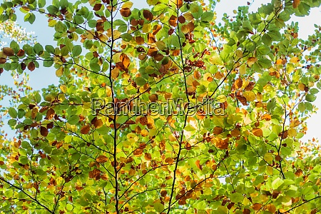 colorful autumn leaves on daylight