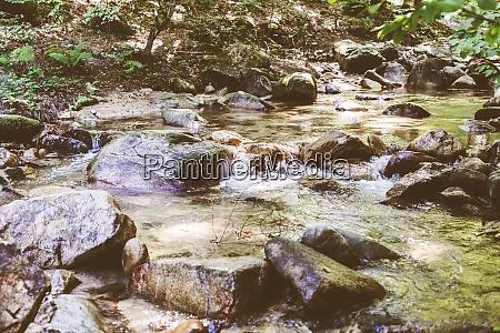 beautiful forest landscape stream flowing