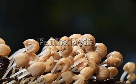 close up colony of toadstool poisonous