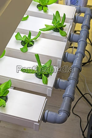 hydroponics water pipe