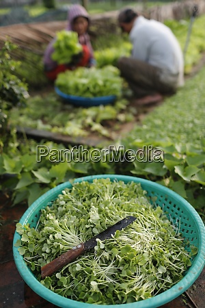 organic, vegetable, gardens, in, tra, que - 28834547