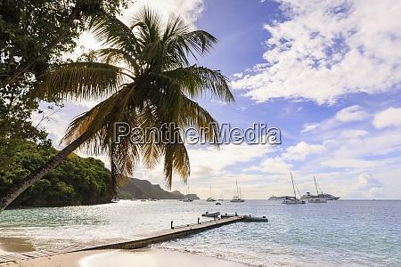 quiet caribbean sea shore palm tree