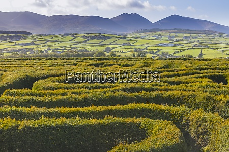 the peace maze castlewellan county down