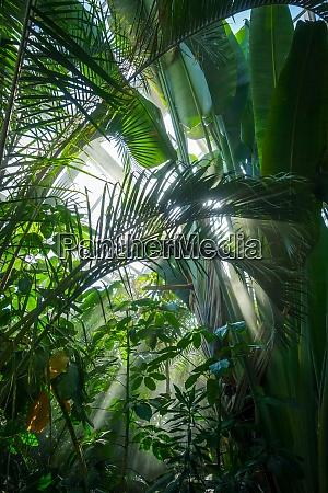 jungle rainforest background