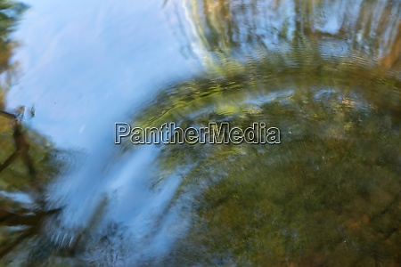 abstract ripples wash through serene forest