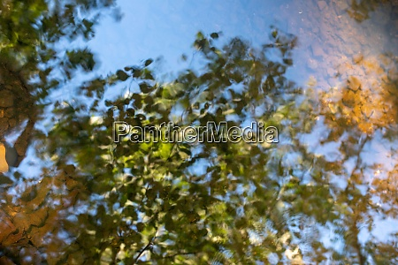 beautiful surreal treetops reflected in still