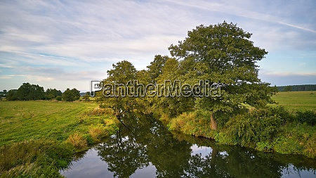 summer background with alder tree on