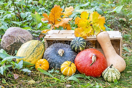 pumkin and squashes in a basket