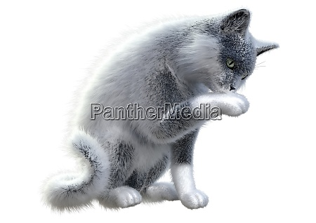 3d rendering domestic cat on white