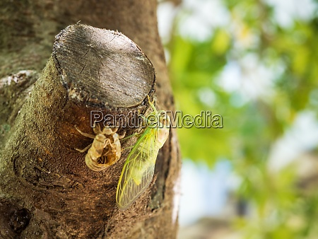 cicada on a tree transformed from