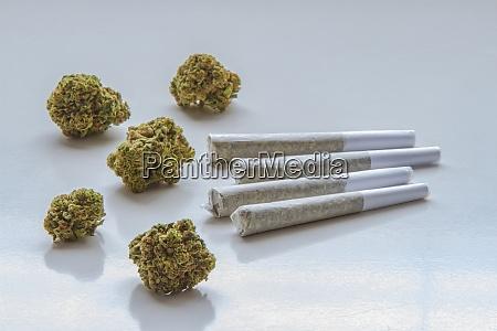 dried flower marijuana and pre rolls