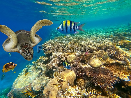 underwater colorful tropical fishes