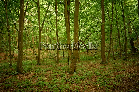 tranquil fairytale woodland summertime in the
