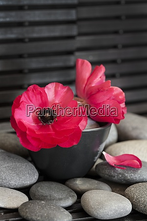 flower still life with pebble across