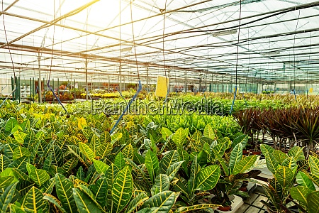 business agriculture botanical gardening