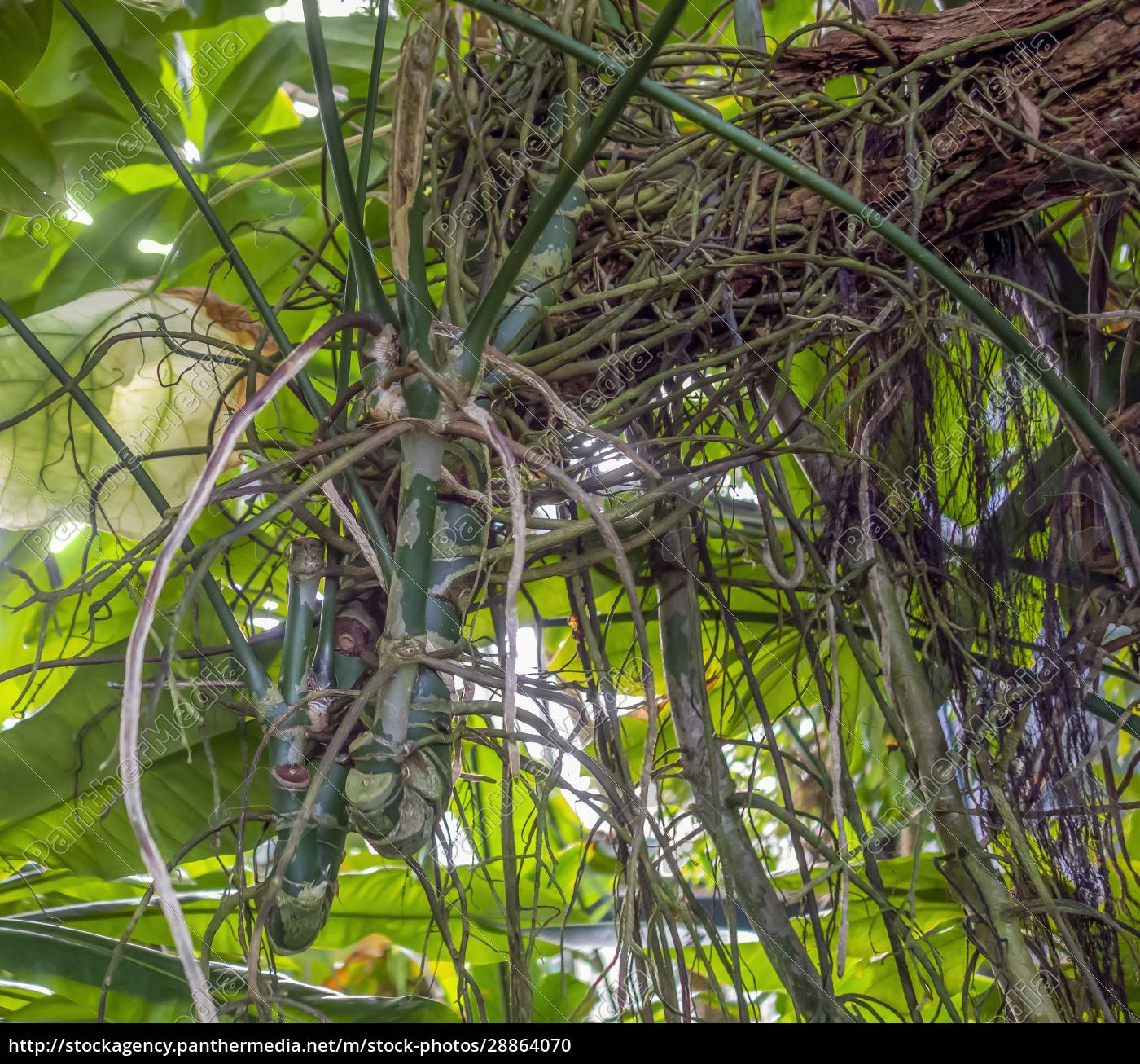 jungle, vegetation, closeup - 28864070