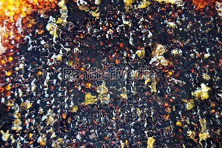 drop of bee honey drip from