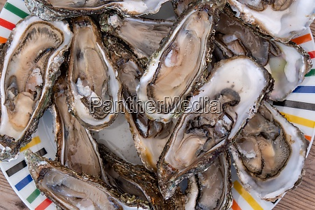 high angle view of oysters in