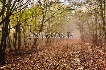 forest path in mist