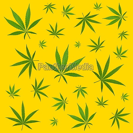 pattern of green hemp cannabis leaves