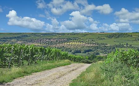 vineyard landscape rhinehessen wine region germany