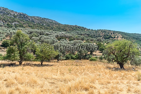 typical landscape in the foothills of