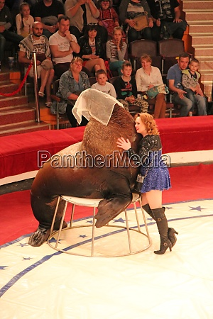 trained sea lion on circus ring