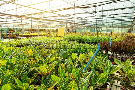 houseplants cultivated as decorative flowers