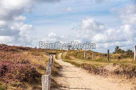 trample path