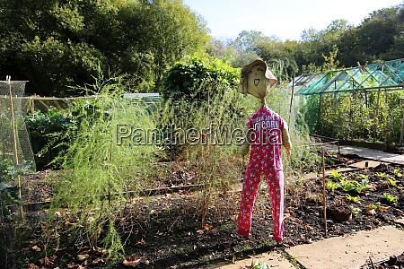 funny scarecrow in an allotment
