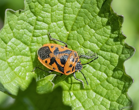 painted bug in sunny ambiance
