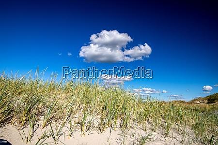 clouds over dune grass