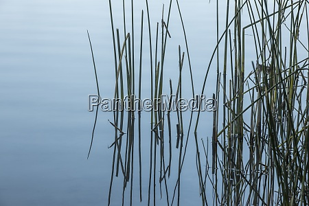 abstract view of grass in calm