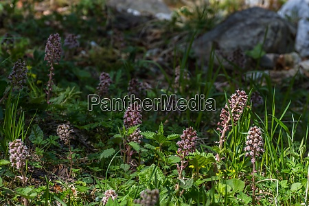flowers on a brook in the