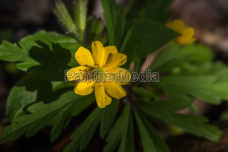 yellow flower in a forest in