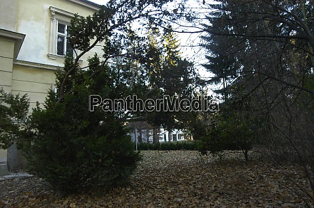 plant cut and ornamental shrub
