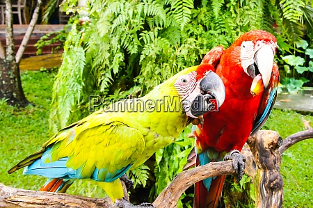 bright large tropical parrots sit on